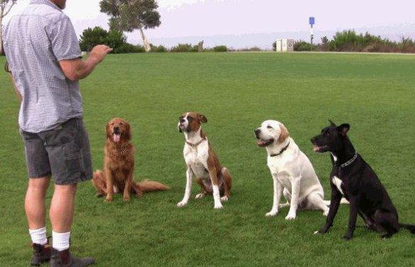 собаки в испании.jpg
