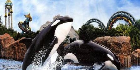 дельфинарий Мариненланд