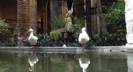 claustro-catedral-barcelona-00.jpg