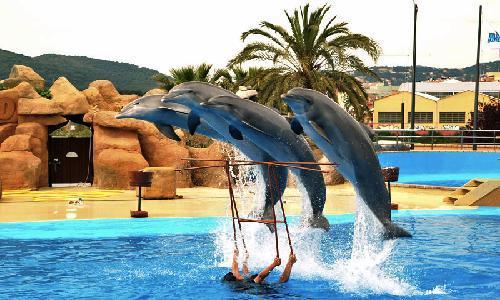 marinelend_dolphins.jpg
