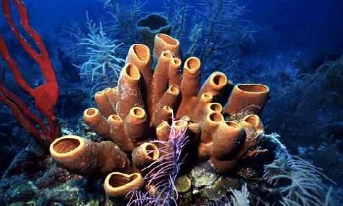 морские губки островов Медес.jpg
