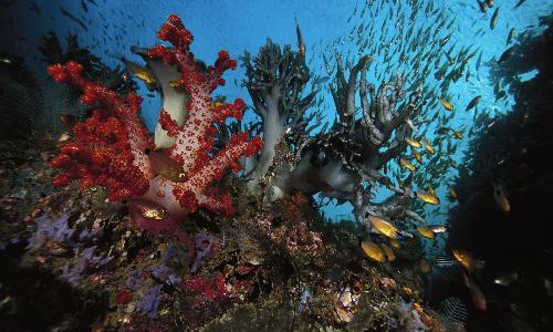 красные кораллы на островах Медес.jpg