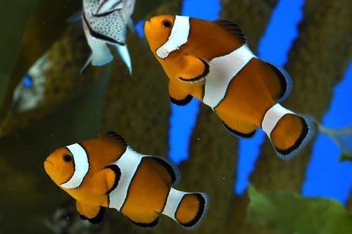 Тропические аквариумы.jpg