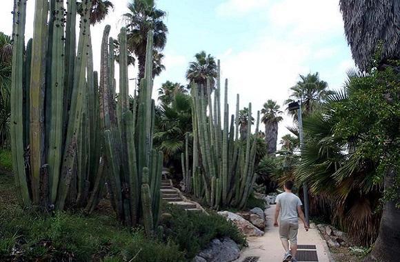 парк кактусов барселона.jpg