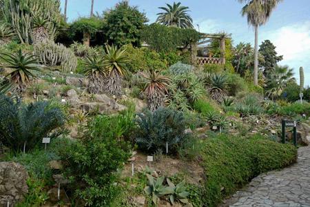 пинья де роса, бланес ботанический сад....jpg