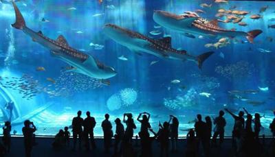 аквариум в барселоне.jpg