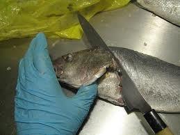 рыба в испании.jpg