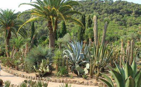 ботанический сад1.jpg